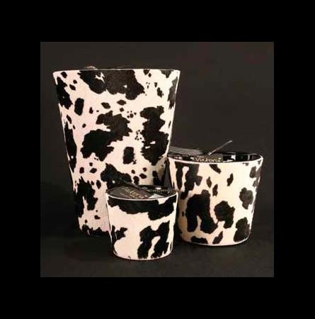 La vache blanche et noire L